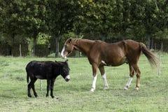 En häst och en åsna Arkivfoto