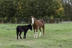 En häst och en åsna Arkivfoton