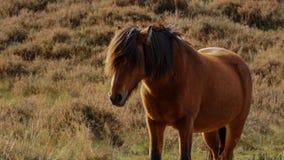 En häst på en äng i höst Royaltyfria Bilder
