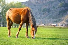 En häst på en dal Fotografering för Bildbyråer