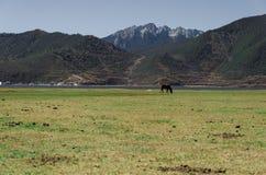 En häst på grässlätt Arkivfoto