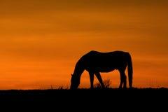 En häst på solnedgången Arkivfoton