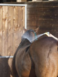 Att vattna med slang besegrar en häst Arkivbild