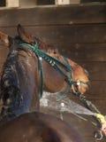 Att vattna med slang besegrar en häst Fotografering för Bildbyråer