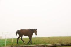 En häst som betar i dimman. Arkivfoto