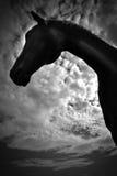 En hästprofil i svartvitt Arkivbilder
