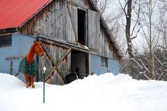 En hästson en snöig lantgård arkivfoto