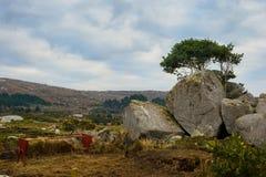 En höförlagematare i fied med får i Connemara arkivfoton
