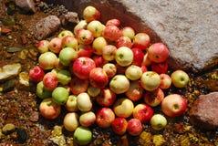 En hög av äpplen i The Creek Arkivbilder