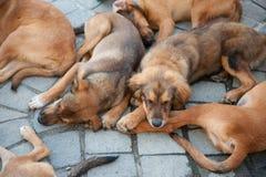 En hög av att sova för hundkapplöpning Arkivbilder
