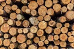 En hög av avverkade trädstammar Arkivfoto