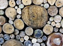 En hög av den klippta wood stubben Royaltyfria Bilder