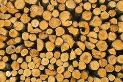 En hög av den klippta wood stubben, frunchtextur Royaltyfri Foto