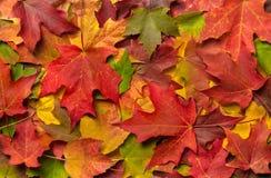 En hög av färgrika Autumn Leaves arkivbilder
