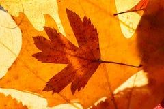 En hög av färgrika höstlönnlöv, bakgrund, textur royaltyfri bild