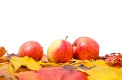 En hög av färgrika höstlönnlöv och tre äpplen i stora partier Arkivbilder