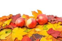 En hög av färgrika höstlönnlöv och tre äpplen i stora partier Royaltyfria Bilder
