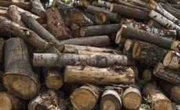 En hög av journaler ligger på en skogplattform, ett sågverk Bearbeta av timmer på sågverket royaltyfri bild