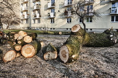 En hög av klippt trä i en stad Arkivfoto
