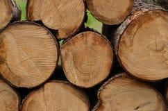 En hög av klippta trädstammar Royaltyfria Bilder