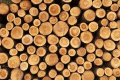 En hög av klippta treestammar som ger ett trevligt, beskådar av yearringsna Royaltyfria Bilder