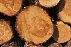 En hög av klippta treestammar som ger ett trevligt, beskådar av yearringsna Royaltyfria Foton