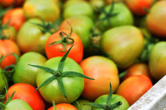 En hög av nya tomater Royaltyfri Foto