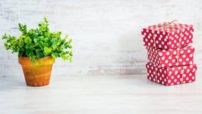 En hög av röda prickiga gåvaaskar och en grön blomma i en lantlig keramisk kruka Vit träbakgrund, kopieringsutrymme Fotografering för Bildbyråer