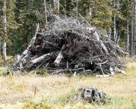 En hög av trä Arkivfoton