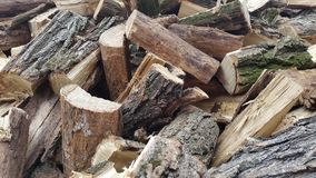 En hög av vedträt vedträ deforestation Royaltyfria Foton