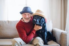 En hög man som inomhus sitter på en soffa med en husdjurhund hemma och att ha gyckel royaltyfria bilder