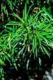 En högväxt grön färgrik växt med visaren som sidor arkivbilder