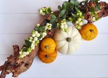 En höstsammansättning av kalebasspumpor, vita bär och en filial Royaltyfri Foto