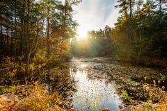 En höstsoluppgång över det lugna lantliga dammet royaltyfri fotografi