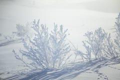En h?rlig dimmig morgon i de norska kullarna i vinter Vitt disigt landskap fotografering för bildbyråer