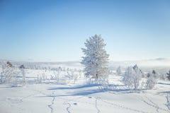 En h?rlig dimmig morgon i de norska kullarna i vinter Vitt disigt landskap arkivbilder
