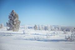 En h?rlig dimmig morgon i de norska kullarna i vinter Vitt disigt landskap royaltyfria bilder