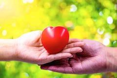 En hand av en kvinna rymmer en röd hjärta royaltyfri bild