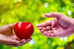 En hand av en kvinna rymmer en röd hjärta royaltyfri fotografi
