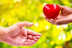 En hand av en kvinna rymmer en röd hjärta arkivbilder