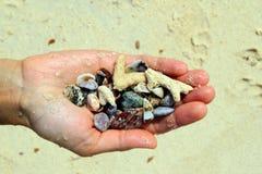 En hand med olika snäckskal och stenar på havsstrandbakgrunden i den soliga sommaren rider ut Royaltyfri Bild