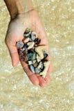 En hand med olika snäckskal och stenar på havsstrandbakgrunden i den soliga sommaren rider ut Royaltyfria Bilder