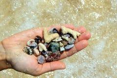 En hand med olika snäckskal och stenar på havsstrandbakgrunden i den soliga sommaren rider ut Fotografering för Bildbyråer