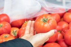 En hand med en tomat som väljer nya saftiga tomater i ett marknadsställe Royaltyfri Fotografi