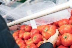 En hand med en tomat som väljer nya saftiga tomater i ett marknadsställe Arkivbild