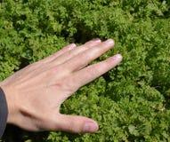 En hand slår gräset älska naturen runt om pölar för pojkehundglädje som rider den running fjädern Royaltyfria Foton