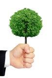 En hand som rymmer ett träd isolerat på en vit bakgrund Royaltyfria Bilder