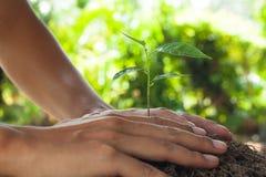 En handen die een jonge plant houden geven Royalty-vrije Stock Afbeelding