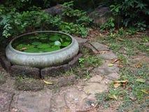En handfat för lotusblommablomma som står ensam i trädgården Arkivbilder