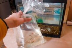 En handinnehavfisk i plastpåse royaltyfri foto